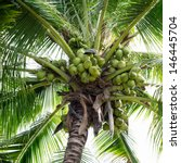 Sweet Coconut Tree