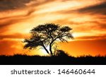Sunset Against Acacia Tree On...