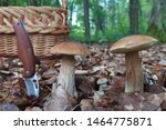 Small photo of Group of mushrooms Boletus edulis, also known as penny bun, cep, porcino or porcini. Edible and very tasty. A wicker basket for mushrooms and a pocket knife in the ground.