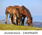 horse and foal in the field | Shutterstock . vector #146496605