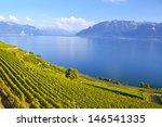 Vineyards In Lavaux Region ...