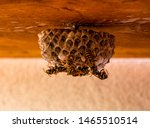 Close Up Of Wasp Nest With A...