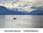 Humpback Whale Tail With Icy...