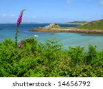 Wild foxglove and fern, St. Agnes and Gugh, Isles of Scilly. - stock photo