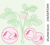 vector strawberry plant... | Shutterstock .eps vector #1465695344
