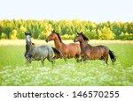 Three Horse Running Trot At...