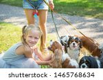 Stock photo woman walking a pack of small dogs cavalier king charles spaniel in park professional dog walker 1465768634