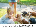 Stock photo woman walking a pack of small dogs cavalier king charles spaniel in park professional dog walker 1465768817
