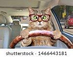 Portrait Of A Cross Eyed Cat...