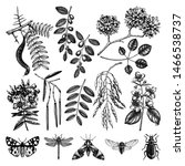 Vector trees in flowers and  insects illustrations set. Hand sketched botanical elements. Vintage garden plant sketches. Floral drawings in engraved style. Summer trees outlines collection.