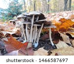 Mushrooms In The Autumn Forest...