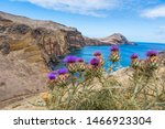 Purple Blooming Thistle In...