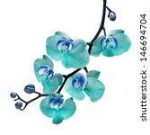beautiful flower orchid  blue... | Shutterstock . vector #146694704