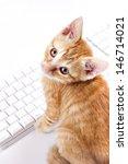 Stock photo cats 146714021