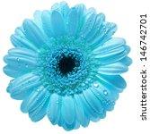 Single Gerbera Flower With...