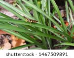 Grasshopper Eating Plant And...