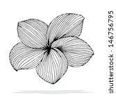 original drawing of frangipani... | Shutterstock .eps vector #146756795