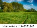 Lush Green Spring Meadow With...