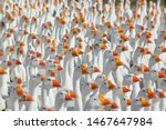 Huge flock of white geese...