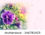 gentle pink card with petunia... | Shutterstock . vector #146781425