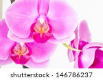orchid isolated on white | Shutterstock . vector #146786237