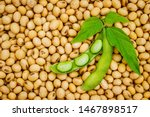 Soy bean mature seeds with...