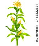 set of ripe maize corncobs with ...   Shutterstock .eps vector #1468322834