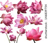 template of beautiful lotus... | Shutterstock . vector #146839754