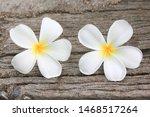 plumeria plumeria spp. white... | Shutterstock . vector #1468517264