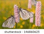 Two Butterflies Of A Blackvein...