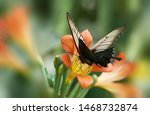 Stock photo butterfly and flower nature macro 1468732874