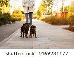 Stock photo woman walking brussels griffon dogs in park 1469231177