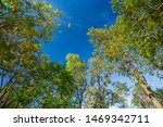 Treetops Framing The Sunny Blu...