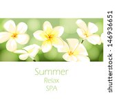 beautiful exotic background... | Shutterstock .eps vector #146936651
