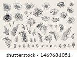 vintage vector botanical... | Shutterstock .eps vector #1469681051