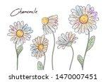 floral botany illustrations.... | Shutterstock .eps vector #1470007451