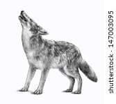 Vector Of A Howling Gray Timbe...