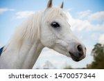 Portrait Of A Farmyard Horse...