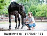 Black Horse Gazing Away Close...