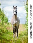 Small photo of Dutch warmblood breed horse outdoors