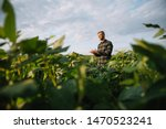 Small photo of Agronomist inspecting soya bean crops growing in the farm field. Agriculture production concept. young agronomist examines soybean crop on field in summer. Farmer on soybean field