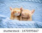 Stock photo baby cat sleeping ginger kitten on couch under knitted blanket two cats cuddling and hugging 1470595667