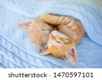 Stock photo baby cat sleeping ginger kitten on couch under knitted blanket two cats cuddling and hugging 1470597101