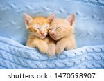 Stock photo baby cat sleeping ginger kitten on couch under knitted blanket two cats cuddling and hugging 1470598907
