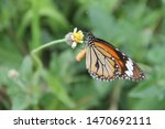 Stock photo butterfly breeding season butterfly with flowers with a blurred background macro view butterfly 1470692111