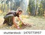 Forester at the pine tree plant for reforestation in the forest