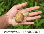 A Snail On My Hand 4