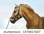 Norwegian Fjord Horse In Sky...