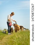 Stock photo dog sitter walks with many dogs on a leash dog walker with different dog breeds in the beautiful 1470872267