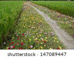 Wild Flowers Growing By A...